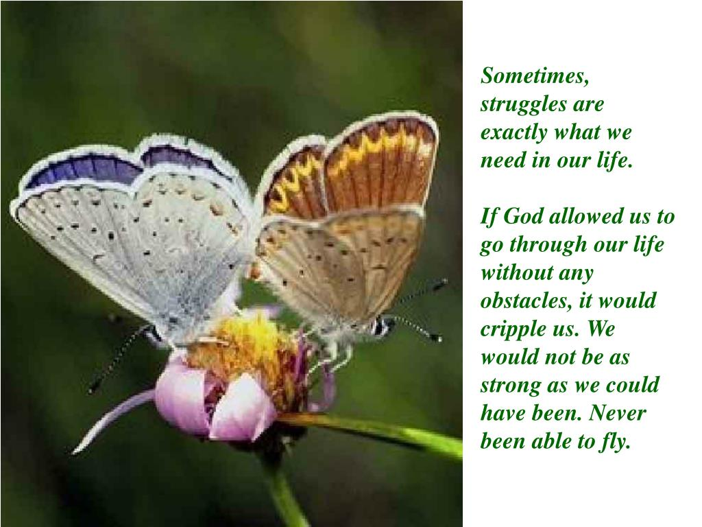 Sometimes, struggles are exactly what we need in our life.