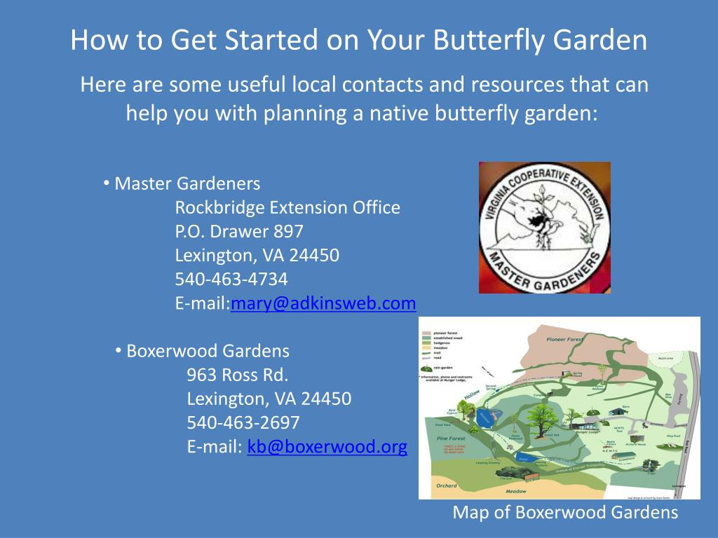 How to Get Started on Your Butterfly Garden