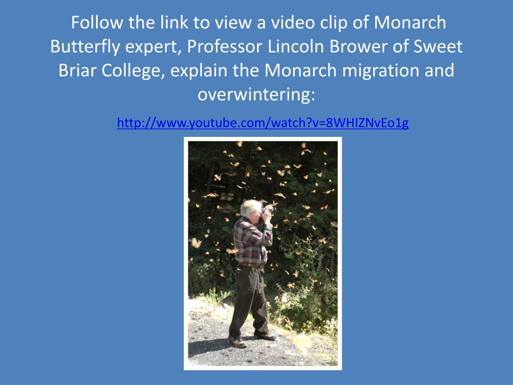 Follow the link to view a video clip of Monarch Butterfly expert, Professor Lincoln Brower of Sweet Briar College, explain the Monarch migration and overwintering:
