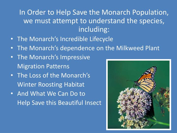 In Order to Help Save the Monarch Population, we must attempt to understand the species, including: