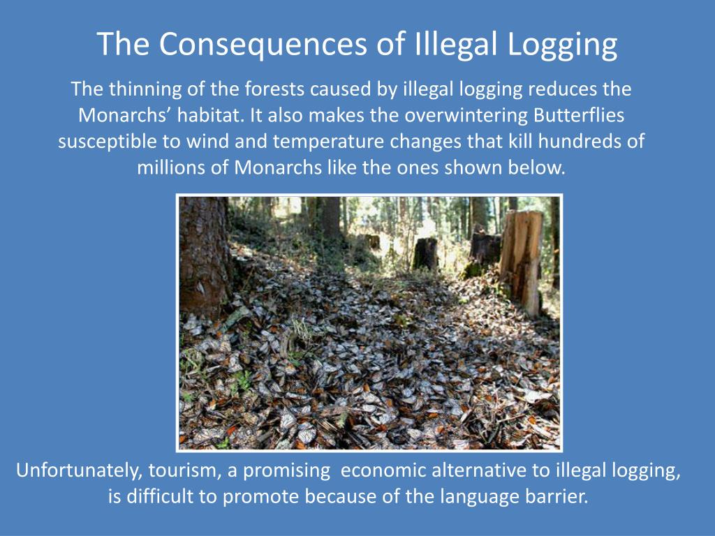 The Consequences of Illegal Logging