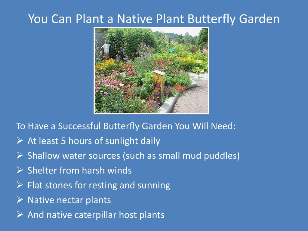 You Can Plant a Native Plant Butterfly Garden