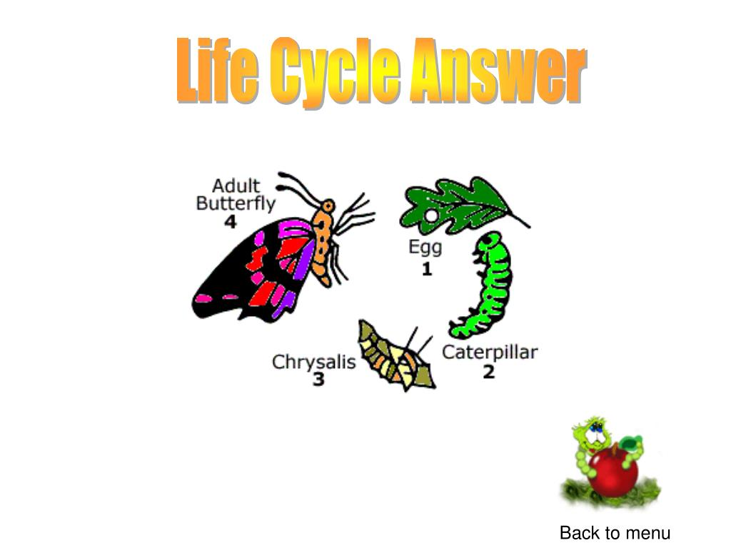 Life Cycle Answer