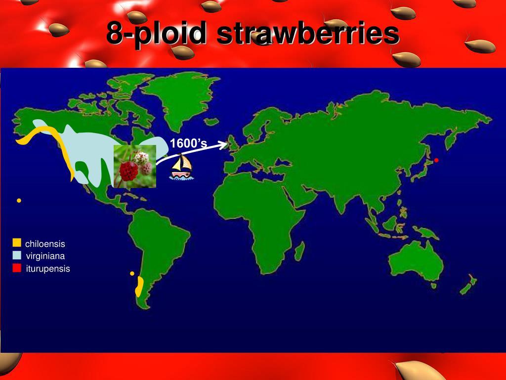 8-ploid strawberries