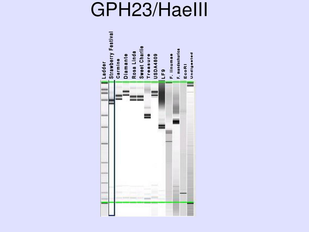 GPH23/HaeIII