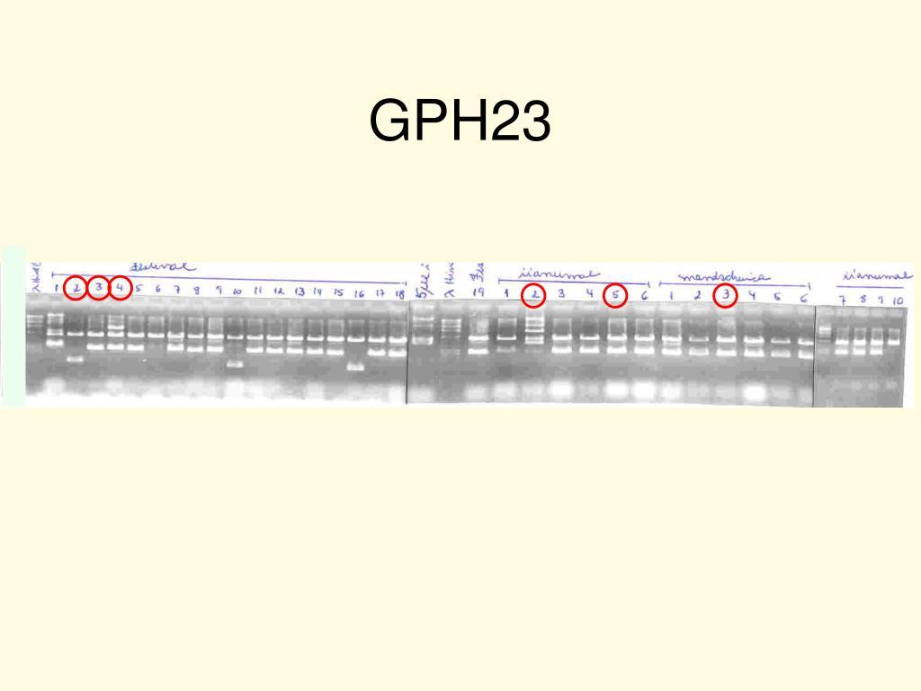 GPH23