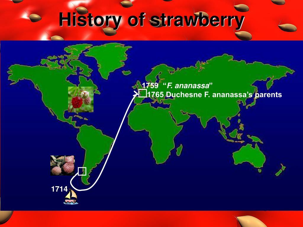 History of strawberry
