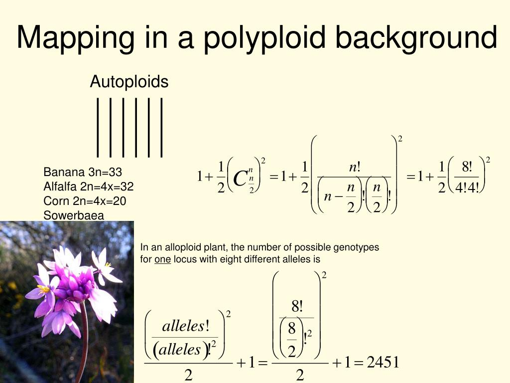 Mapping in a polyploid background