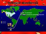 octoploid strawberries