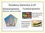 strawberry genomics at uf
