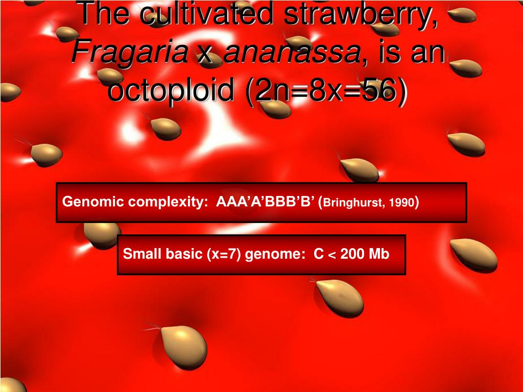The cultivated strawberry,