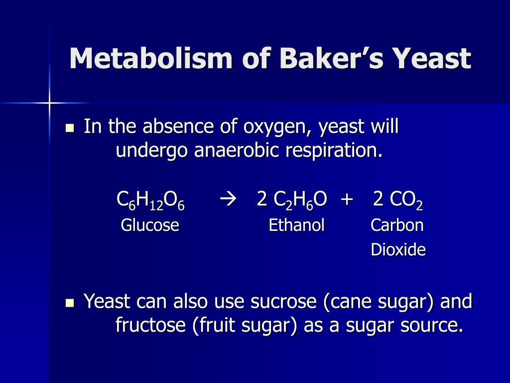 Metabolism of Baker's Yeast
