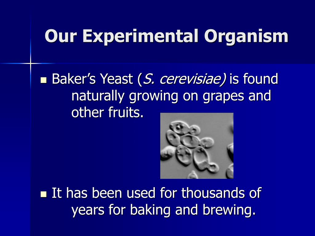 Our Experimental Organism