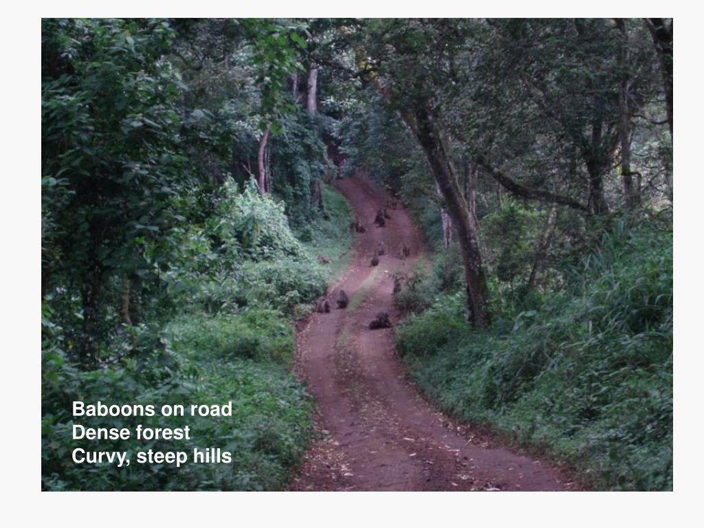Baboons on road