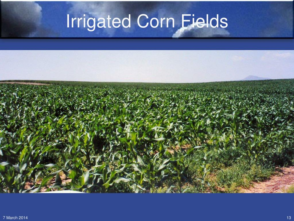 Irrigated Corn Fields