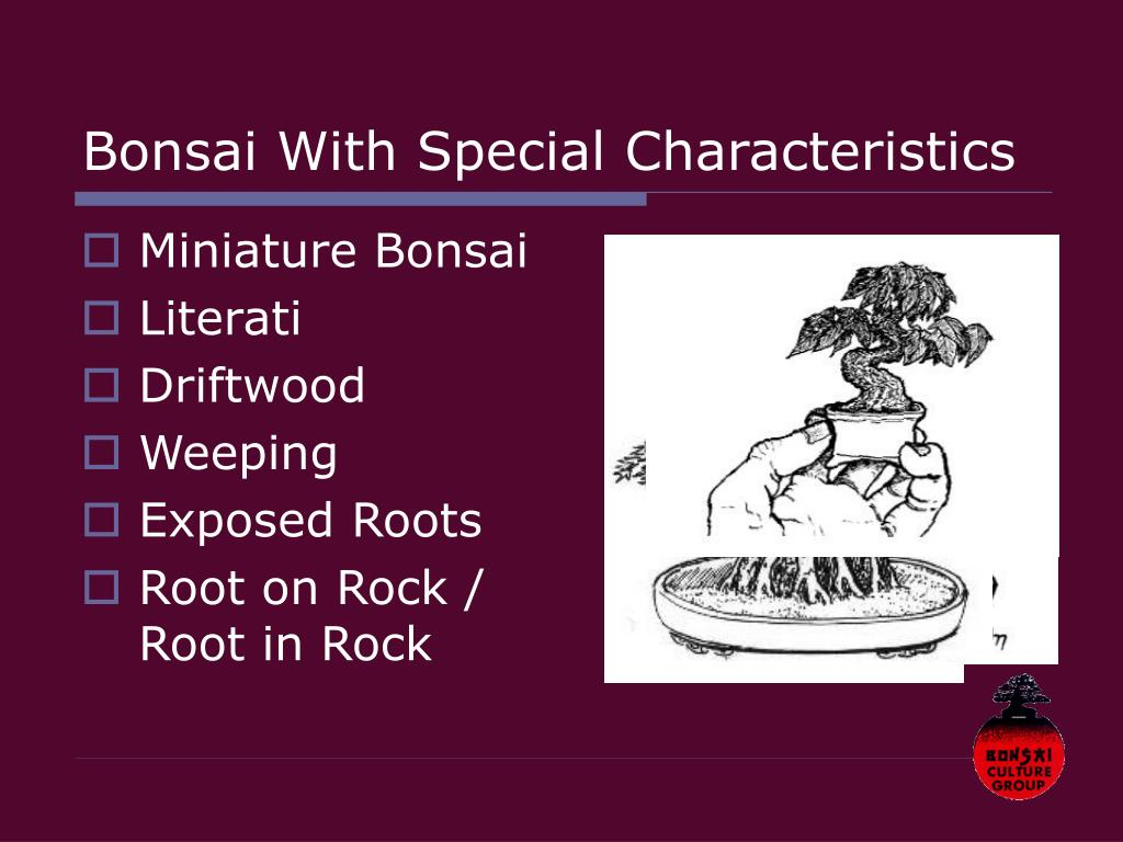 Bonsai With Special Characteristics