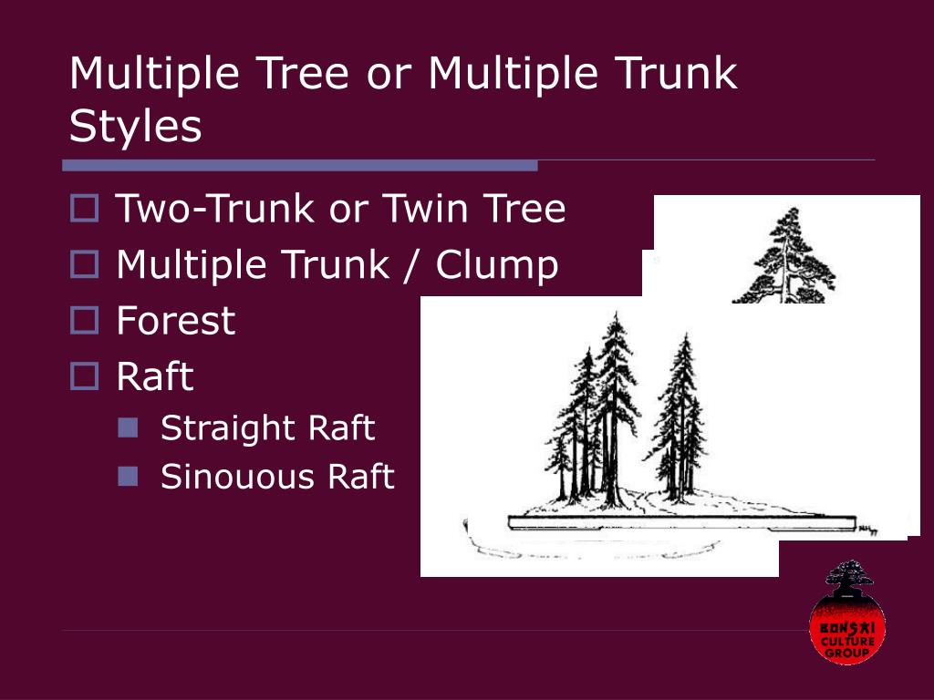 Multiple Tree or Multiple Trunk Styles