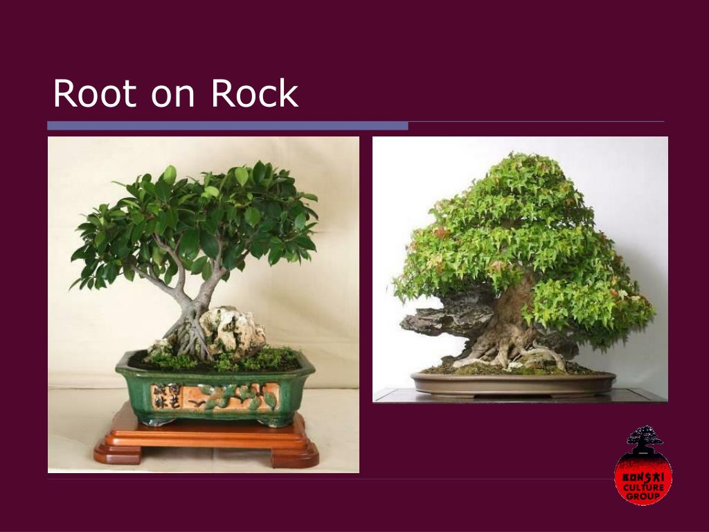 Root on Rock