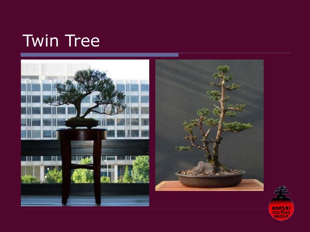 Twin Tree