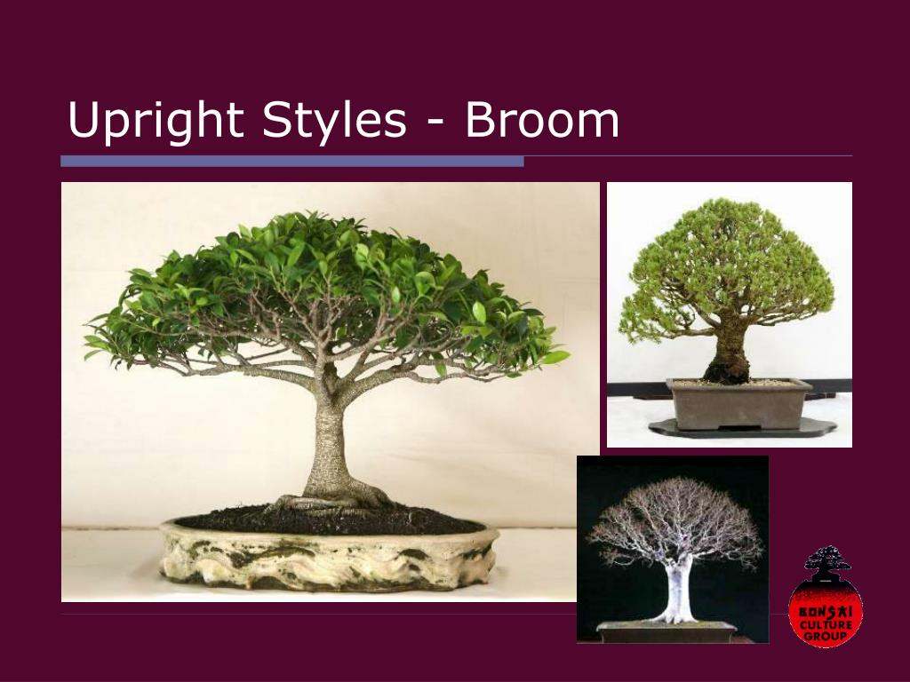 Upright Styles - Broom