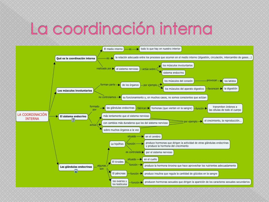 La coordinación interna