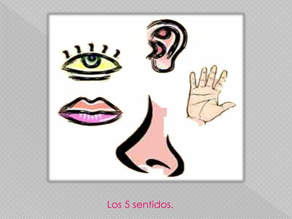 Los 5 sentidos.