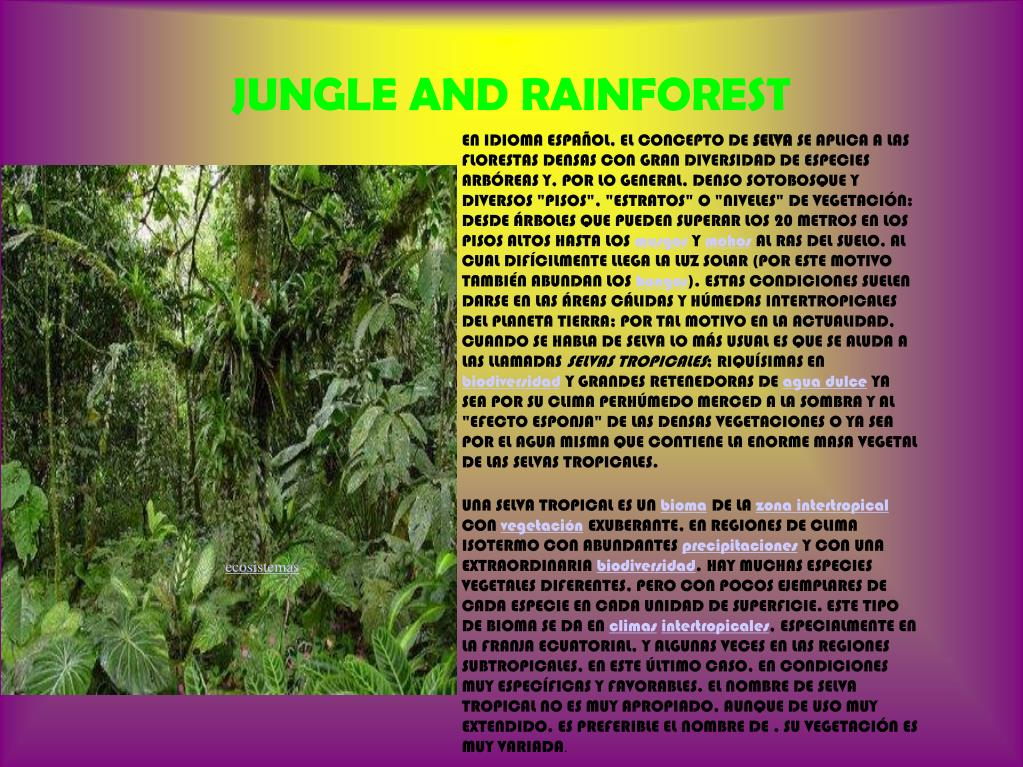JUNGLE AND RAINFOREST