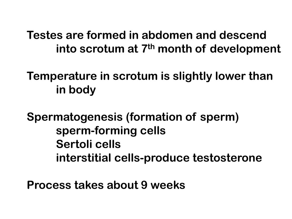 Testes are formed in abdomen and descend