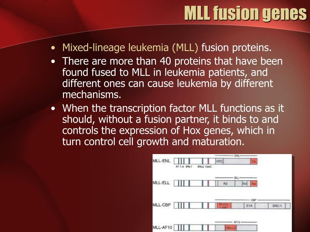 MLL fusion genes