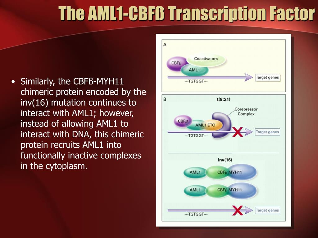 The AML1-CBFß Transcription Factor