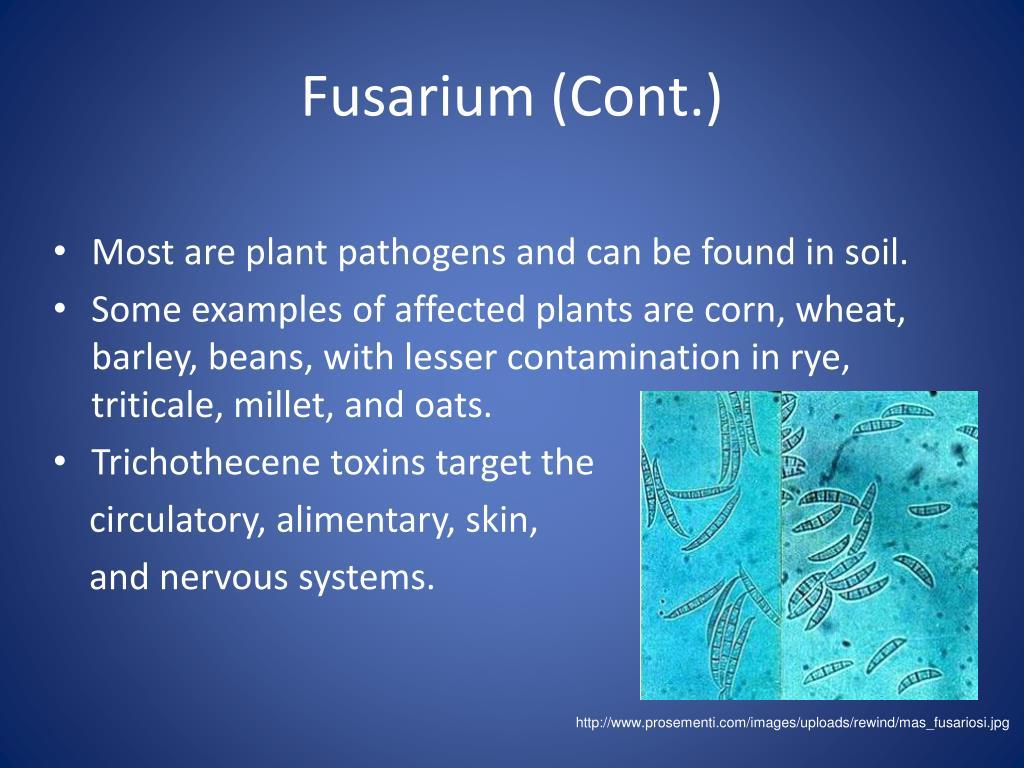 Fusarium (Cont.)