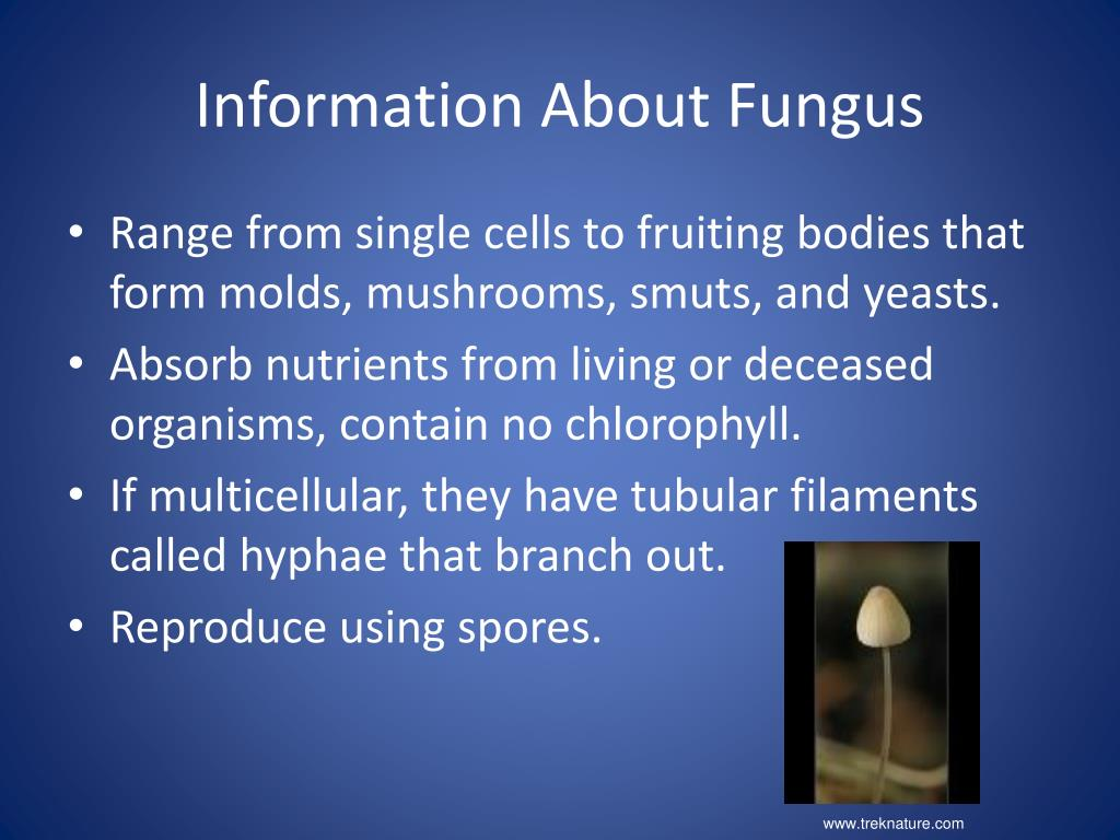 Information About Fungus