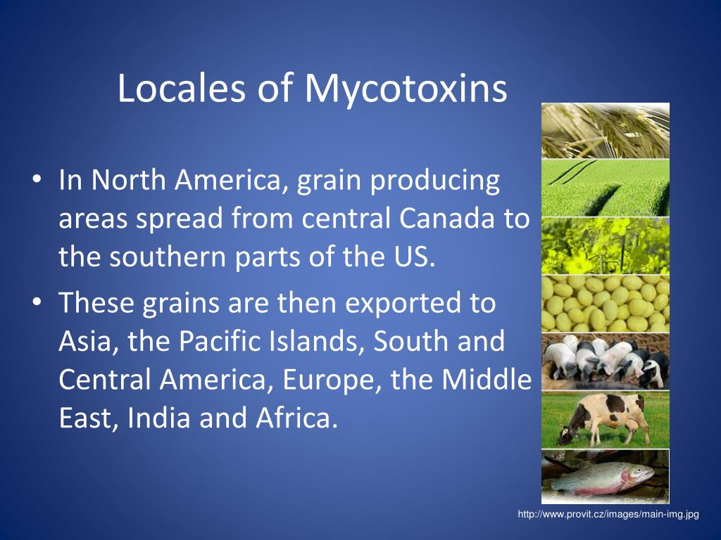 Locales of Mycotoxins