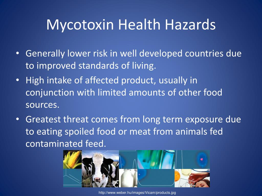Mycotoxin Health Hazards