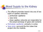 blood supply to the kidney20