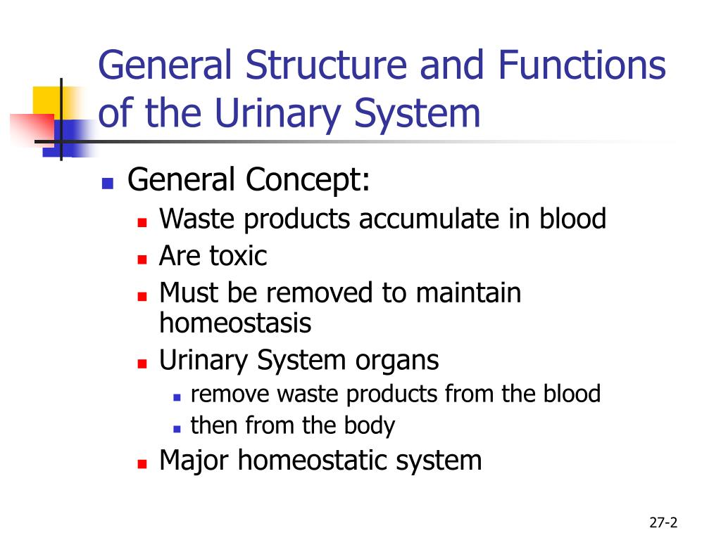 General Structure and Functions