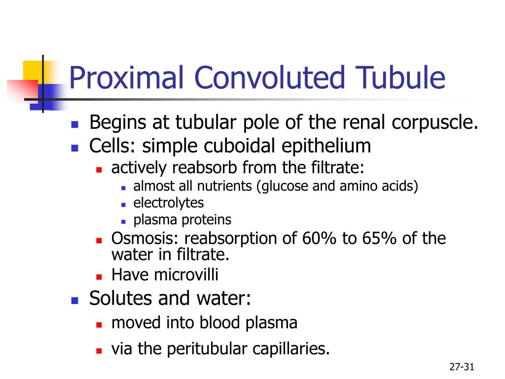 Proximal Convoluted Tubule