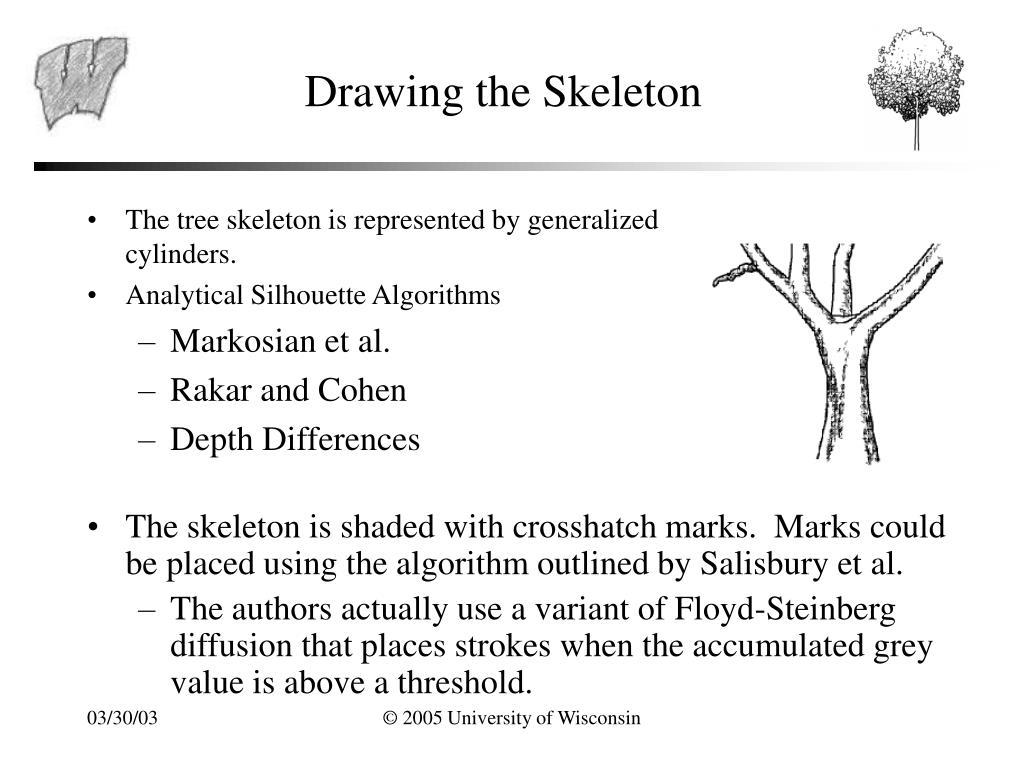 Drawing the Skeleton
