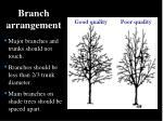 branch arrangement
