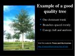 example of a good quality tree