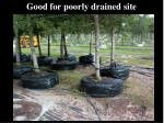 good for poorly drained site