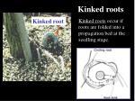 kinked roots