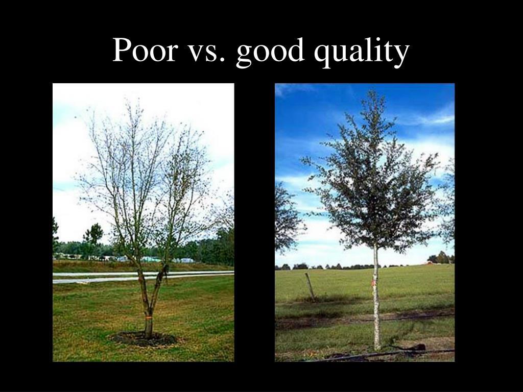 Poor vs. good quality