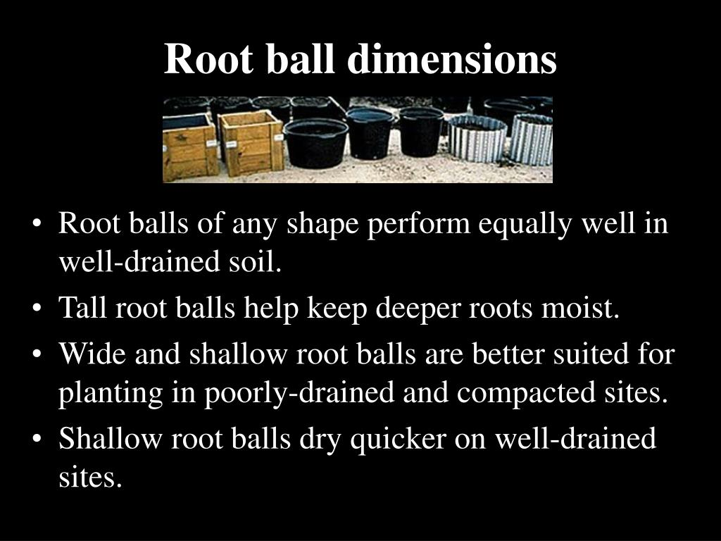 Root ball dimensions