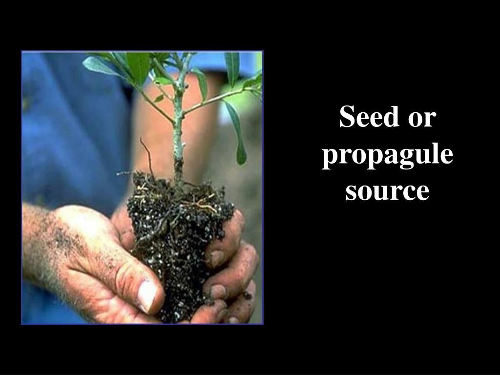 Seed or propagule source