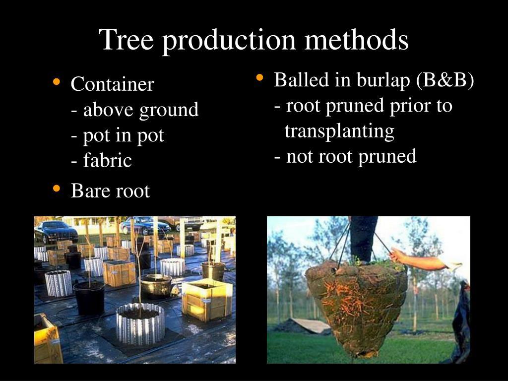 Tree production methods