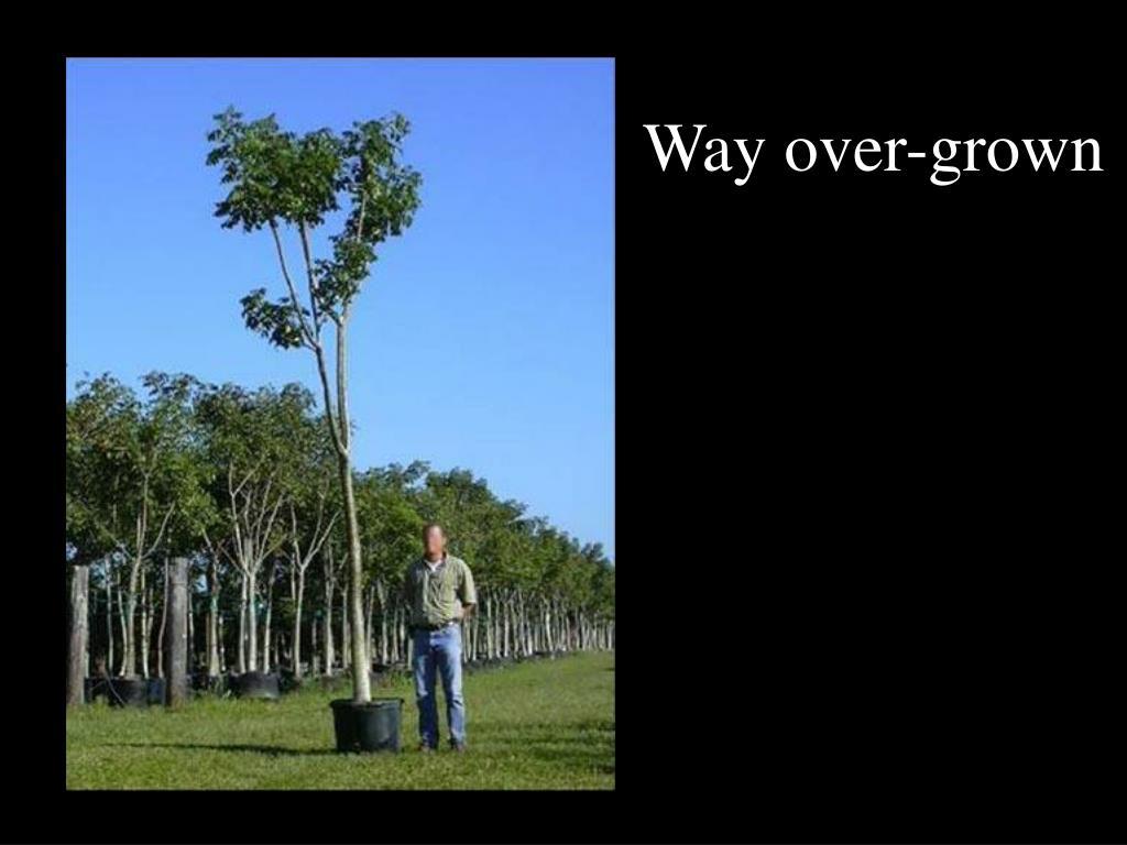 Way over-grown
