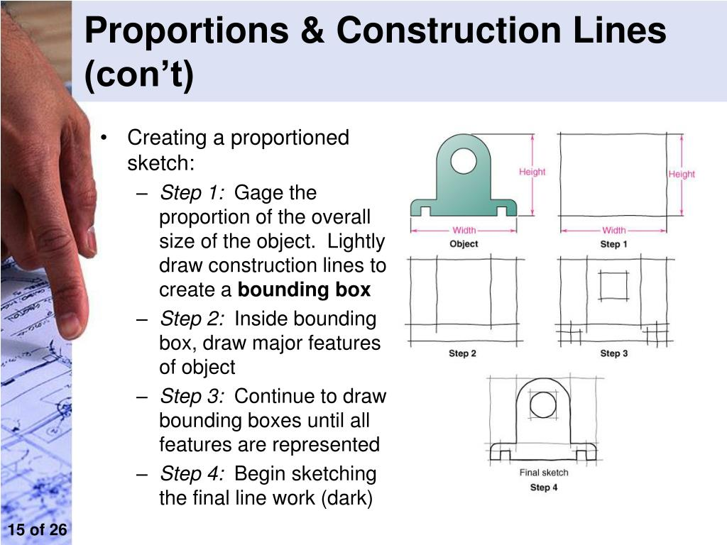Proportions & Construction Lines (con't)