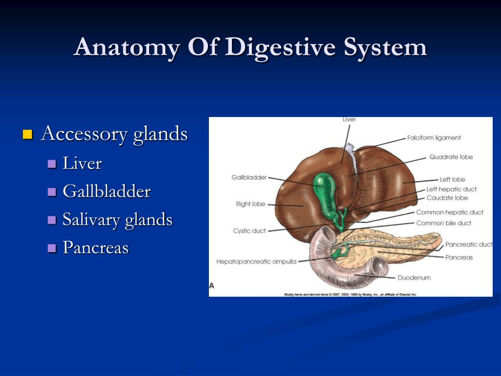 ppt   radiography of the gi system powerpoint presentation