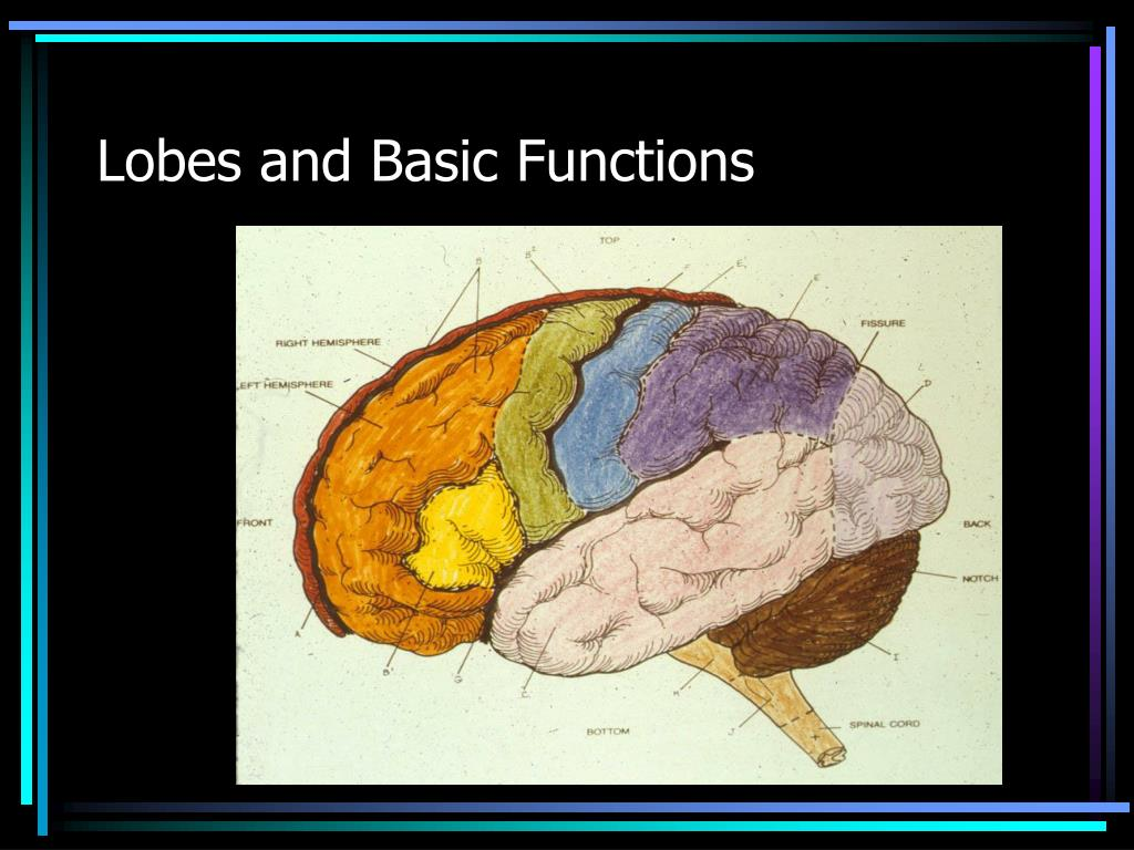 Lobes and Basic Functions